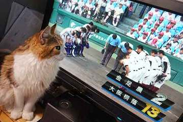 180821甲子園決勝.jpg