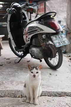190216ホヒアン猫a.jpg