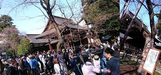 190320東京桜標準木e.jpg