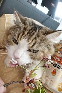 190415旨そうでない桜.jpg