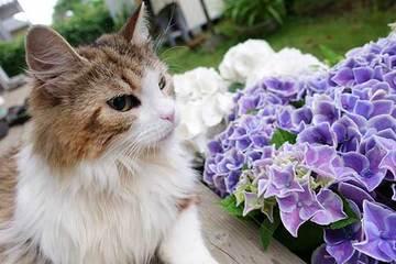 190610紫陽花a.jpg