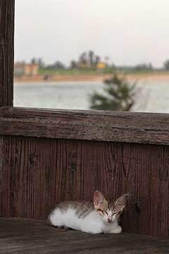 190628浜猫.jpg